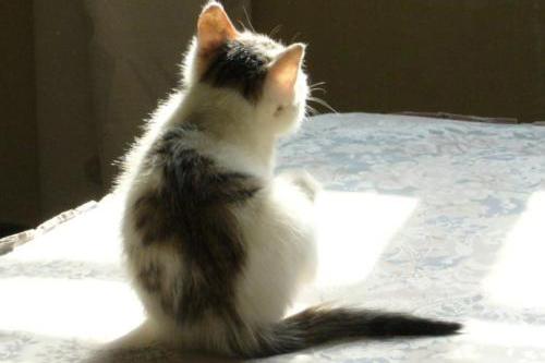 如何打造猫宅:一人一猫一室,媲美诗和远方